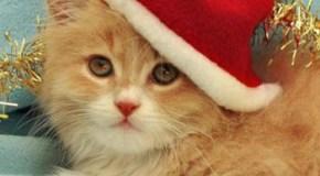 Detalles originales para regalar a un gatito en estas fiestas