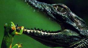 El método para detectar enfermedad en los reptiles