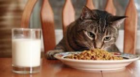 La correcta alimentación del gato