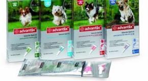 Advantix es salud y protección para tu mascota