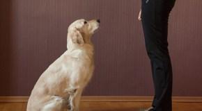 Como ensenarle a tu perro a sentarse