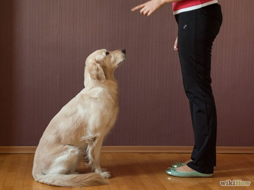 670px-Teach-Your-Dog-to-Sit-Step-5-Version-2