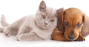 Comprar perros y gatos en España