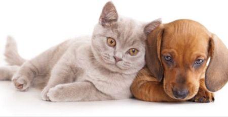 ley-prohibe-comprar-perros-gatos-tiendas-mascotas-espana-default