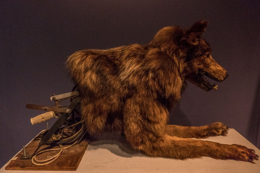 wolf-Museum-of-the-Moving-Image-Queens-1600x1067