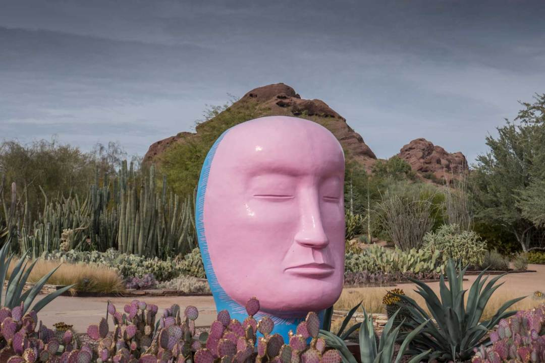 Desert Botanical Garden Papago Park Phoenix Arizona