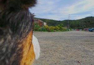 A dog's eye view