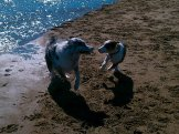 Bliss is joyful dogs playing