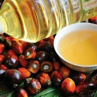 Die ganze Wahrheit über Palmöl