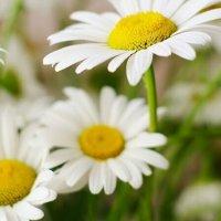 Stressz gyógynövények