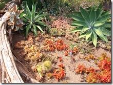 plants-trees-shrubs-flowers-hawaii-honolulu-zoo (3)