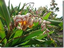 plants-trees-shrubs-flowers-hawaii-honolulu-zoo (7)