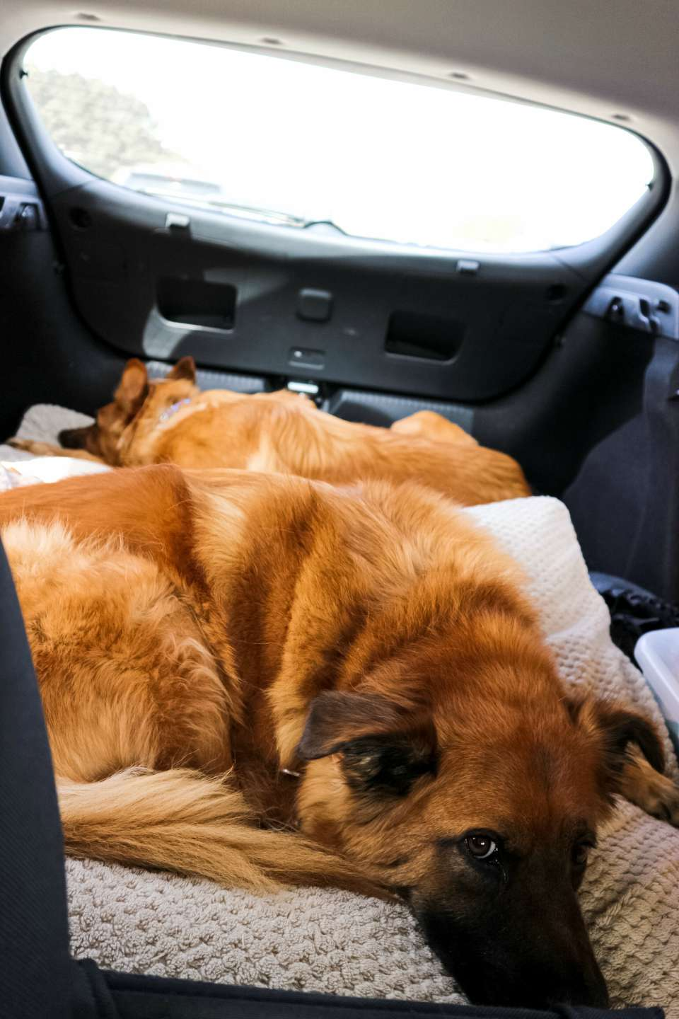 How to Travel with Dogs - I'm Fixin' To - @mbg0112