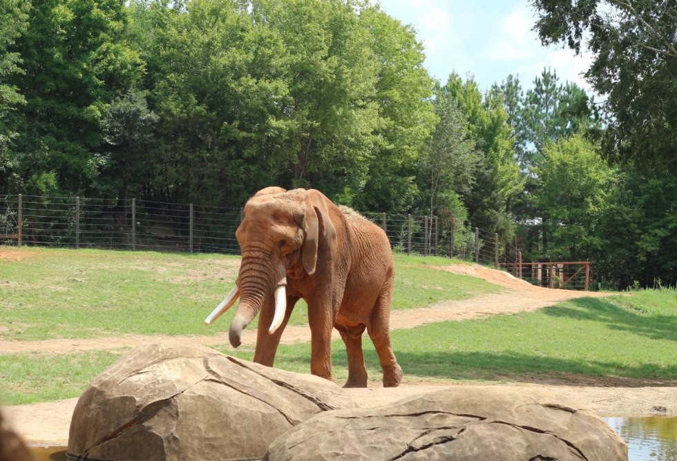 A Day Trip to the North Carolina Zoo - I'm Fixin' To - @mbg0112