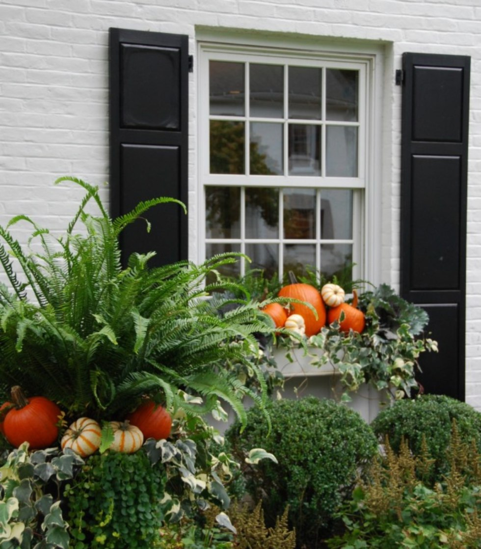 Inspiration Board: Fall Front Porch Ideas - I'm Fixin' To - @mbg0112 | Inspiration Board: Fall Front Porch Ideas by popular North Carolina life and style blog, I'm Fixin' To: image of a front porch decorated with potted ferns, and pumpkins.