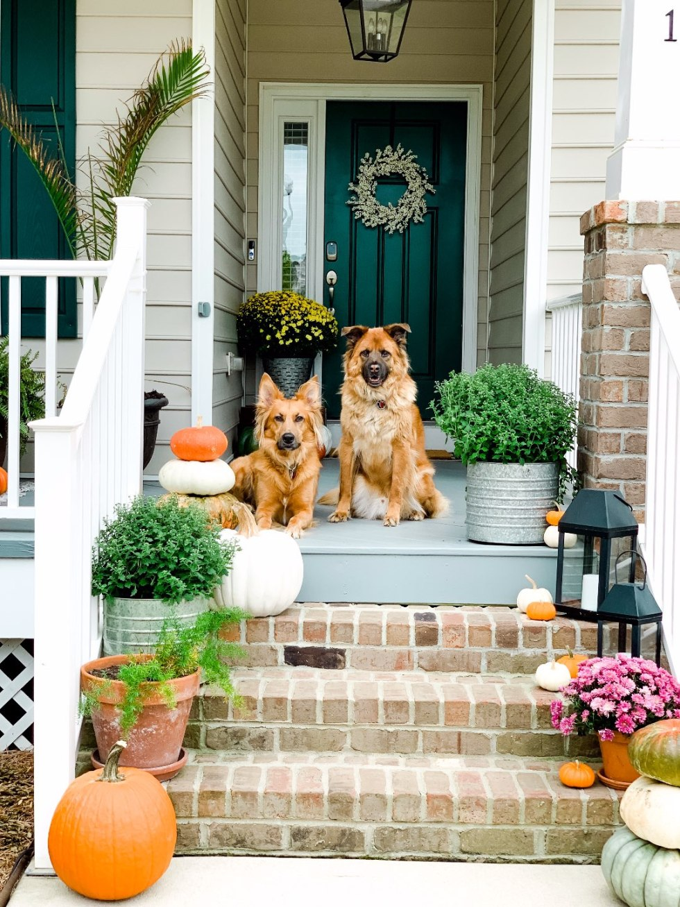 "Our Inviting and Cozy Fall Front Porch Decor Ideas - I'm Fixin' To - @mbg0112 | Our Inviting and Cozy Fall Front Porch Decor Ideas - I'm Fixin' To - @mbg0112 | Our Inviting and Cozy Fall Front Porch Decor Ideas by popular North Carolina lifestyle blog, I'm Fixin' To: image of two dogs sitting on a front porch decorated with Target Smith and Hacken 12"" Iron Galvanized Planters, Target Threshold 22"" Artificial Berry Wreath White, pumpkins, Target Smart Living San Rafael II 15"" LED Solar Mission Outdoor Lanterns, mums, and green plants."