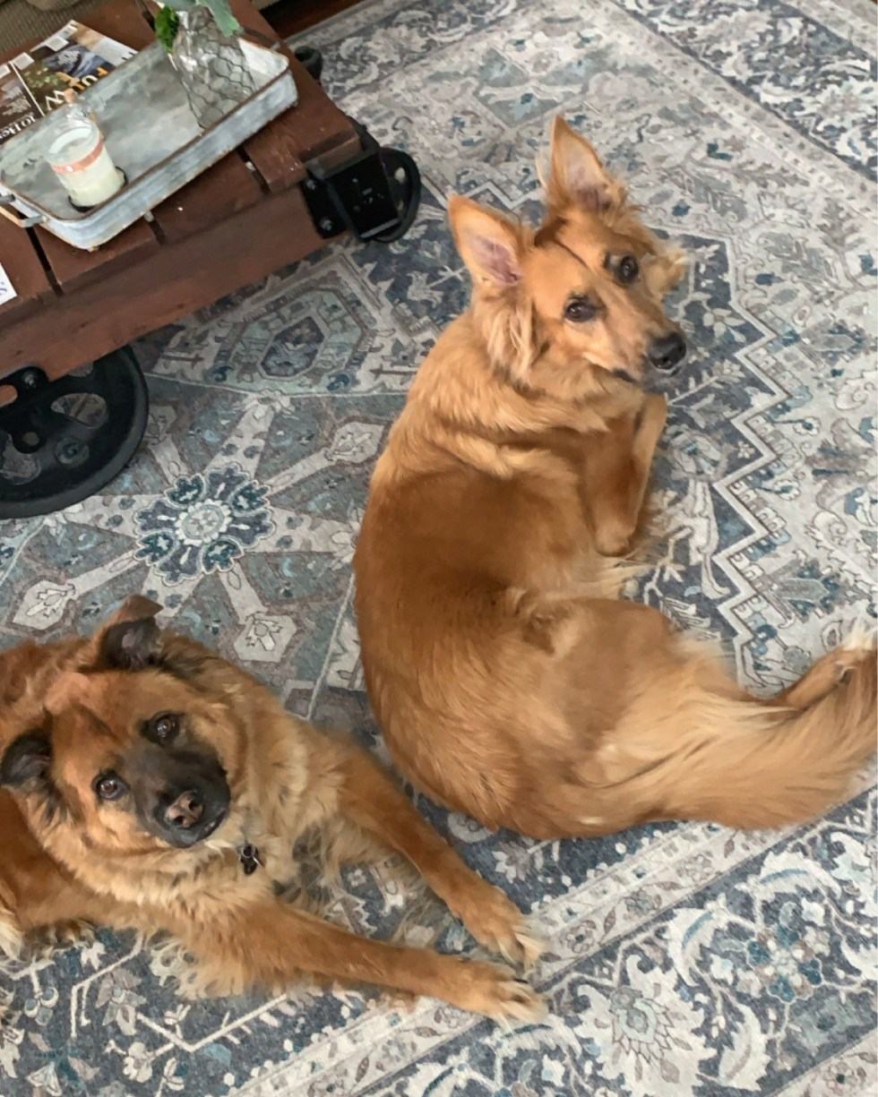 5 Recent Favorite Influenced Purchases - I'm Fixin' To - @mbg0112 | Favorite Purchases by popular N.C. life and style blog, I'm FIxin' To: image of two dogs sitting on a Ruggable Hendesi Heriz Abalone Rug.