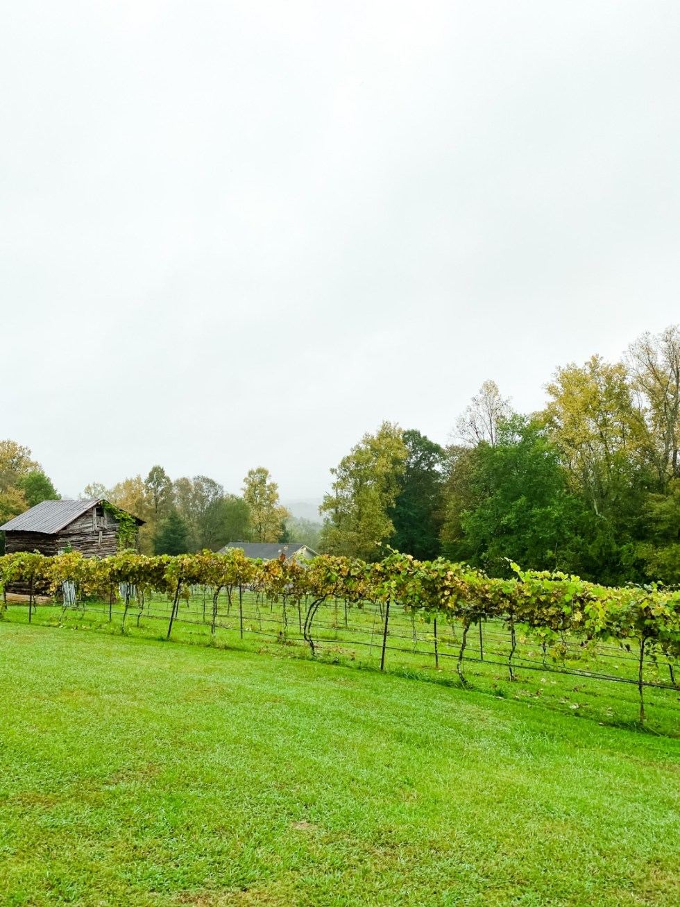 Western NC Wineries: 6 Wineries to Visit During your Next Girls' Weekend - I'm Fixin' To - @mbg0112 |Western NC Wineries by popular NC blog, I'm Fixin' To: image of Carolina Heritage Vineyard and Winery.