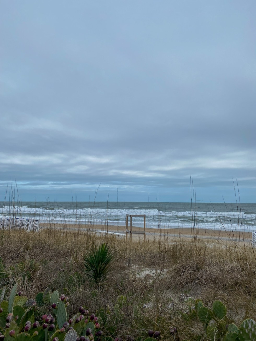 A Spring Weekend in Wilmington, NC: the Best Things to Do - I'm Fixin' To - @imfixintoblog | Weekend in Wilmington by popular NC travel blog, I'm Fixin' To: image of cactus on a beach.
