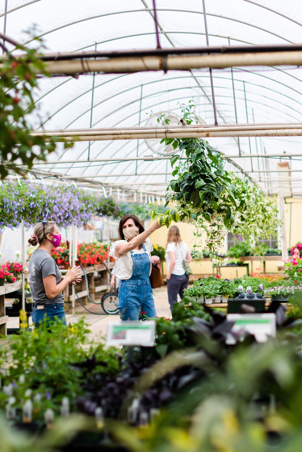 5 Spring Planting Tips with Fairview Garden Center - I'm Fixin' To - @imfixintoblog |Best Plants to Plant in Spring by popular NC lifestyle blog: image of two women looking at a hanging plant at the Fairview Garden Center.