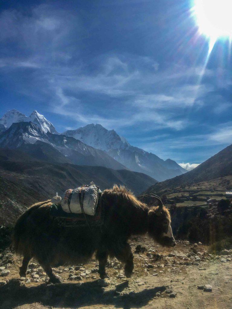The Himalayan Transportation Beast