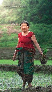 Ready to Plant Rice in Nepal