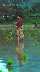 Farmers in the fields of Nepal