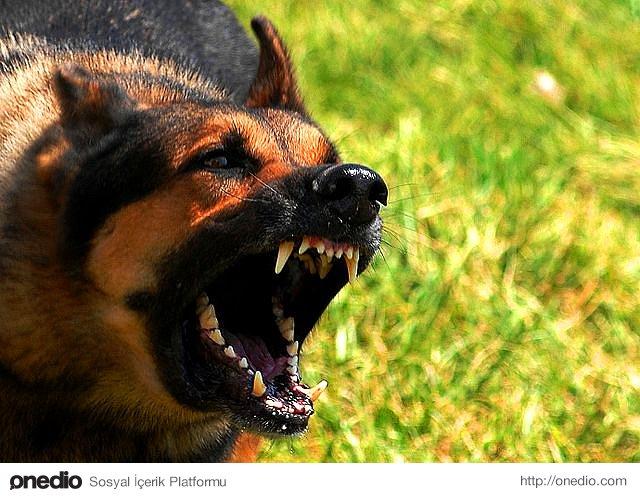 Isıracak köpek dişini göstermez.