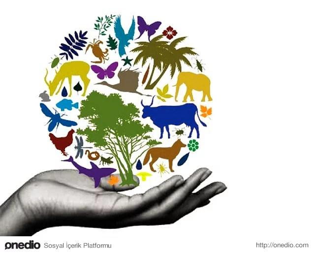 Kosta Rika biyo-çeşitlilik olan ülkelerden biri!