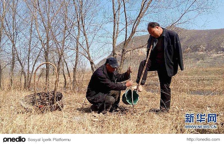 Wenqi de 53 yaşında. O da 2 kolunu 3 yaşındayken geçirdiği bir kazada kaybetmiş.