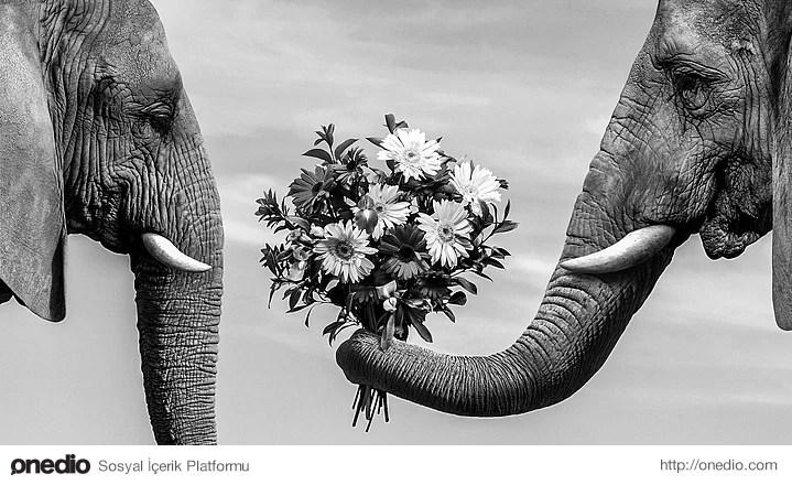 Dişi filler sürü halinde dolaşırken, erkek filler yalnızlardır ve sürekli sürü değiştirerek yaşarlar.