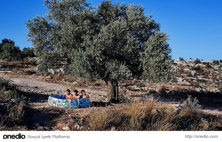 Zeytin ağacının altında plastik havuzda serinleyen çocuklar
