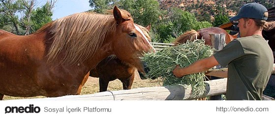 Bu güne kadar kafeste kalmış hayvanları doğada yalnız bırakmayacaklar.