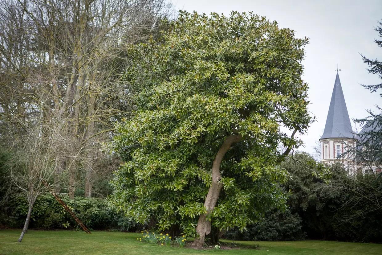 quel arbre original planter dans le jardin