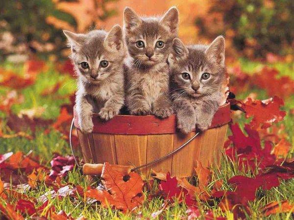 Kedi Yavrusunun Dünyanın En Şirin Hayvanı Olduğunun 25 ...
