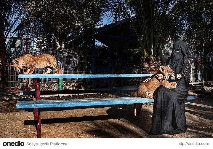 Gazze'de hayvanat bahçesinde yavru aslan seven kadın