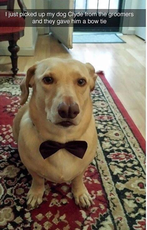 So handsome! Such class