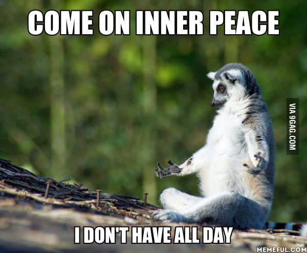 Image result for meerkat meditating