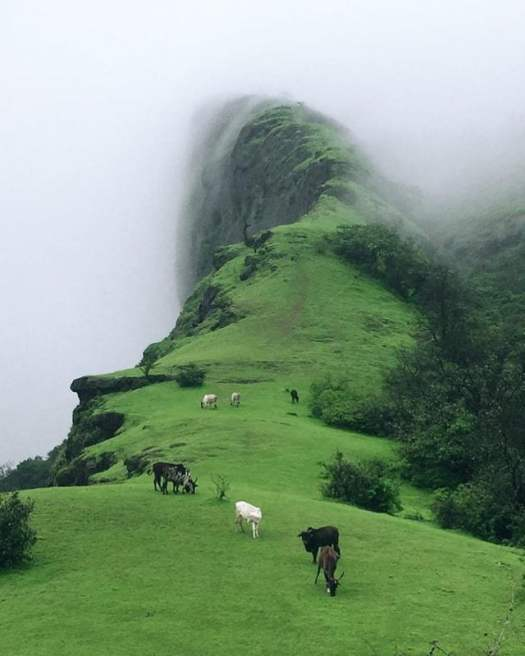 Dream place for cows.