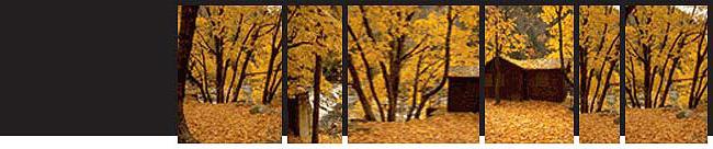 fall3_top.jpg