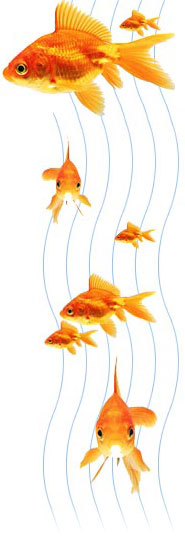 fish-r1.jpg