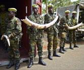 Uganda-Ivory-Haul