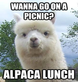 AlpacaLunch