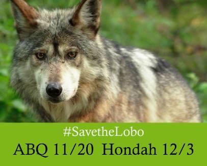 SaveTheLoboABQ and Hondah-1