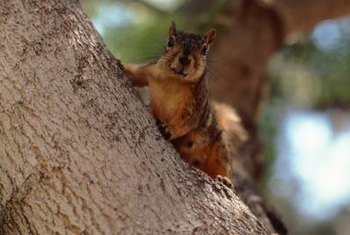 Image result for squirrels in trees