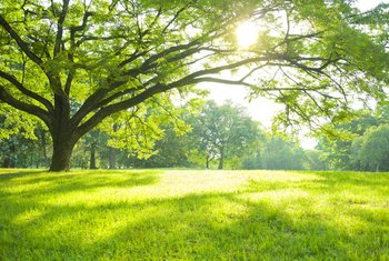 What Kinds of Trees Should Be Planted in the Full Sun ...