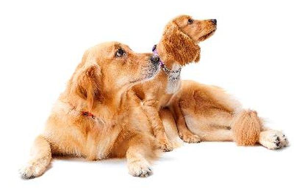Real Pet Insurance