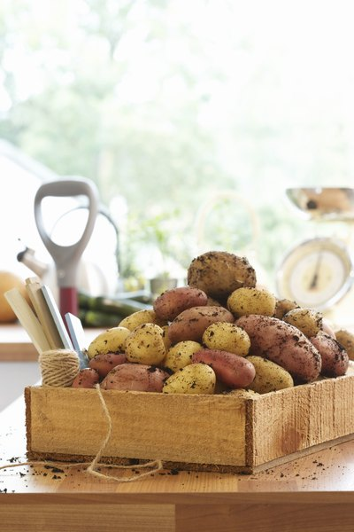 Catalase Enzymes In Potatoes Education