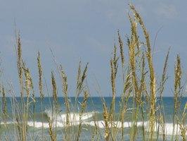 Beaches Near Elizabeth City, North Carolina | eHow