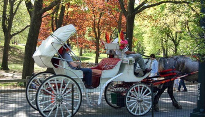 The Design Of The Two Wheeled Dog Carts Were Based On Gig And Most Commonly Drawn By Horses Harnessed In Tandem That Is